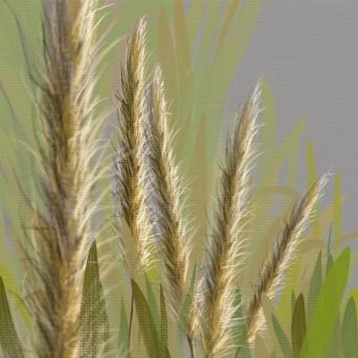 poaceae | shahir | Digital Drawing | PENUP