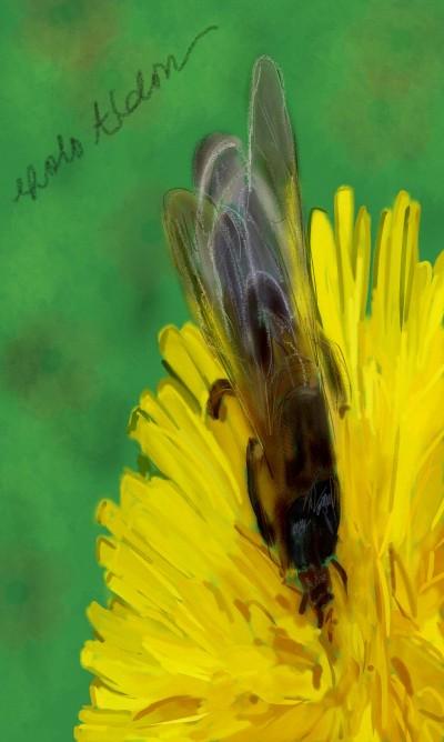 Bee | Choloaldon | Digital Drawing | PENUP