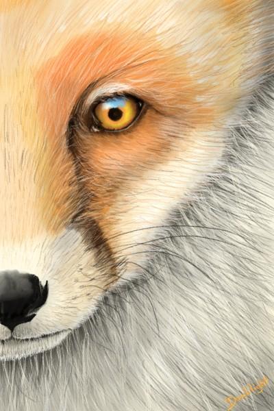 L'oeil de renard | Doodilight | Digital Drawing | PENUP