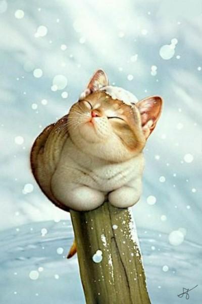 cat | Sesilija | Digital Drawing | PENUP