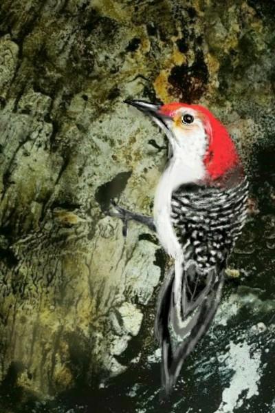 Woodpecker | les | Digital Drawing | PENUP