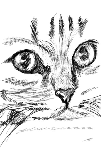 cat | kushaljraut | Digital Drawing | PENUP