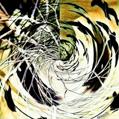 Birds In A Hurricane  | SusieBrooklyn | Digital Drawing | PENUP