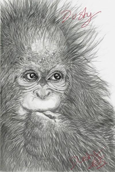 baby orangutan eating( in pencil)   dusty   Digital Drawing   PENUP