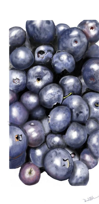 blueberries | Lor-Van | Digital Drawing | PENUP