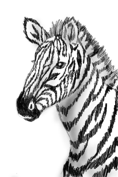 Zebra | Shawn | Digital Drawing | PENUP