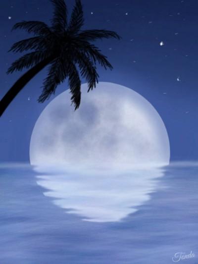 Night In Paradise    Tonda   Digital Drawing   PENUP