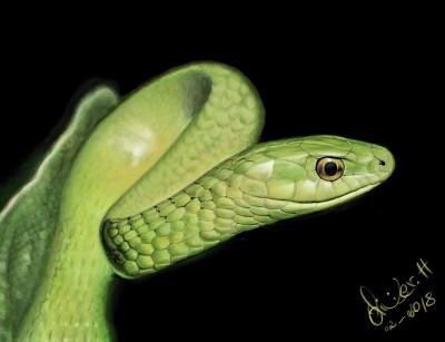 green mamba | artgraphit | Digital Drawing | PENUP