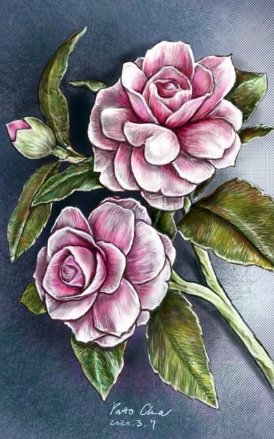 Camellia (동백 ツバキ) | Pato.Cha | Digital Drawing | PENUP
