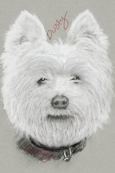 little Scot the scottish terrier | dusty | Digital Drawing | PENUP
