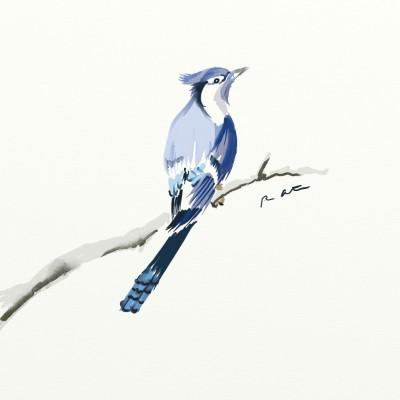 Blue Jay | Grafixguru | Digital Drawing | PENUP