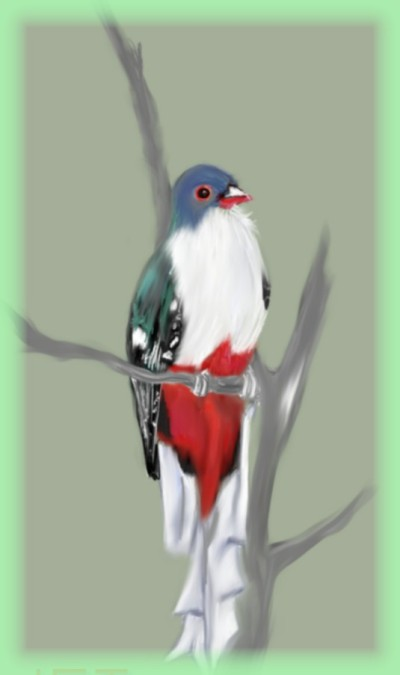 Little Bird  by K.E.R | katherineeroach | Digital Drawing | PENUP