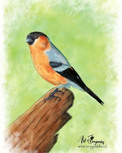 Let's draw bird | ArtByBenjamin | Digital Drawing | PENUP