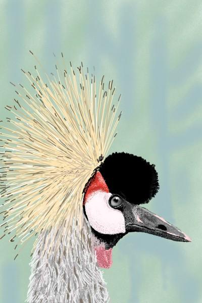 Crest (feathers) - grey crowned crane | AntoineKhanji | Digital Drawing | PENUP