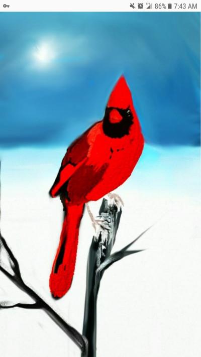 Winter Red Bird | Spirited | Digital Drawing | PENUP
