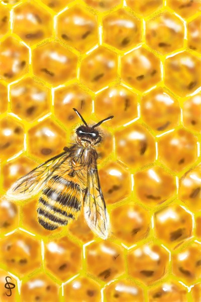 Honeycomb | MidnightPainter | Digital Drawing | PENUP