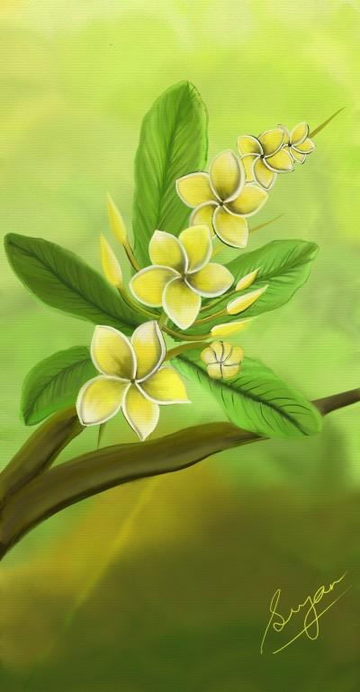 Yellow Plumeria | Sugan | Digital Drawing | PENUP
