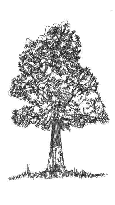 tree | panduaa | Digital Drawing | PENUP