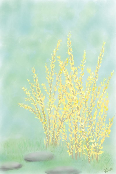 Forsythia is blooming | cici | Digital Drawing | PENUP