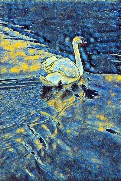Swan | Hannah | Digital Drawing | PENUP