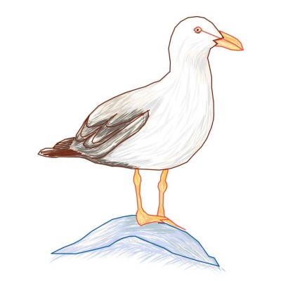 Seagull | Gaycouple | Digital Drawing | PENUP