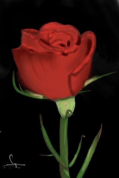 Red Rose  | MFS | Digital Drawing | PENUP