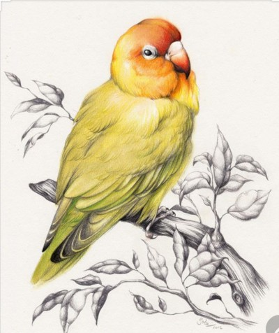 yellow bird | hamsitha | Digital Drawing | PENUP