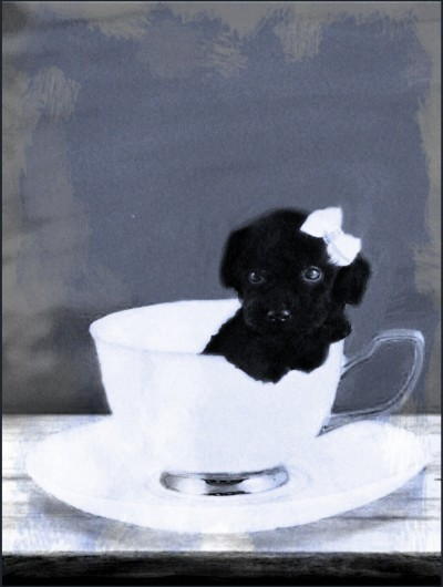 teacup puppy | Zenovia | Digital Drawing | PENUP