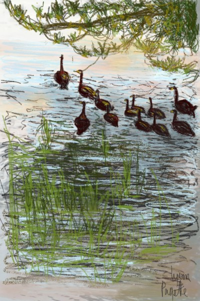 watching the ducks | Lynn | Digital Drawing | PENUP