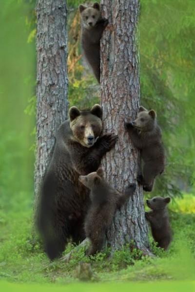 familia de osos   arcelia   Digital Drawing   PENUP