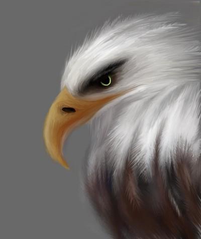 Bird- Proud Eagle | Tina | Digital Drawing | PENUP