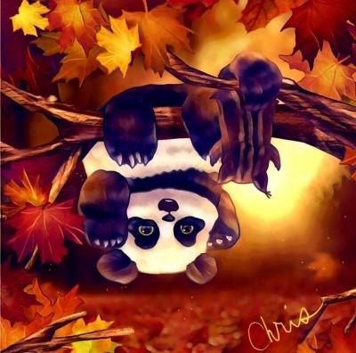 Panda | Chris | Digital Drawing | PENUP