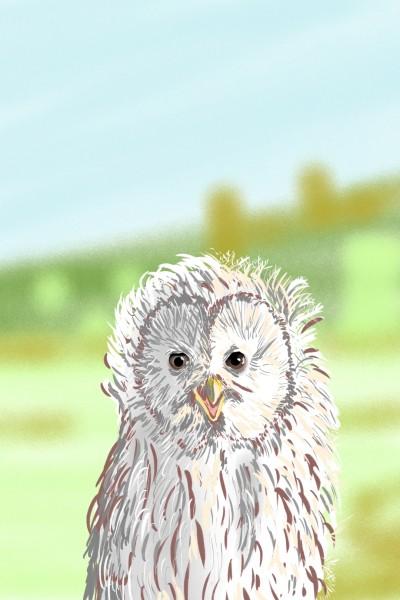 Snowy owl | AntoineKhanji | Digital Drawing | PENUP