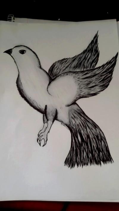 Bird | Emelia | Digital Drawing | PENUP