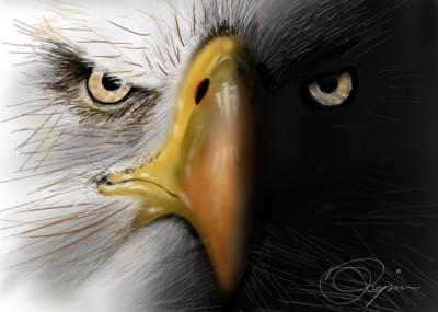 eagle in dark | Pejman | Digital Drawing | PENUP