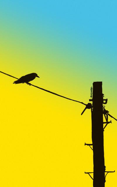 Bird2 | Andhra.Ghandi | Digital Drawing | PENUP