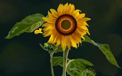 Sunshine in a Flower | Babycat5 | Digital Drawing | PENUP