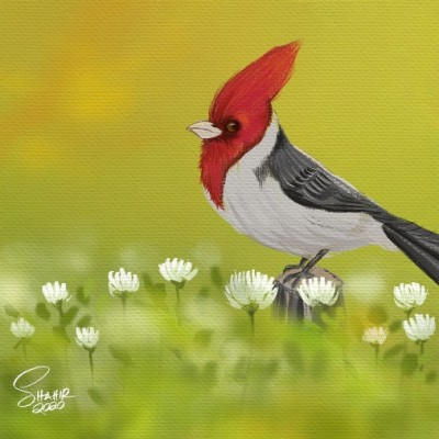 a bird | shahir | Digital Drawing | PENUP