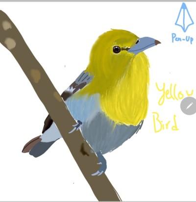 yellow bird | DaEun | Digital Drawing | PENUP