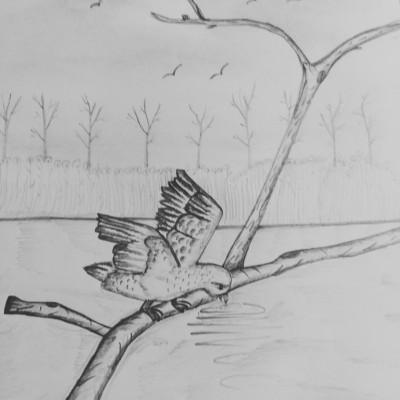 birds  | dwitipriya | Digital Drawing | PENUP