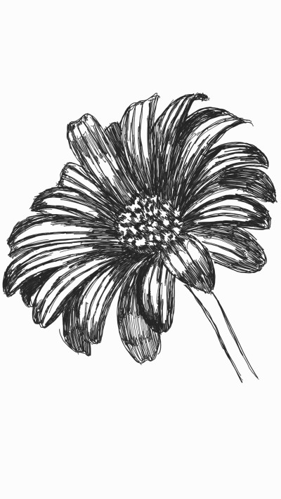 daisy flower | panduaa | Digital Drawing | PENUP
