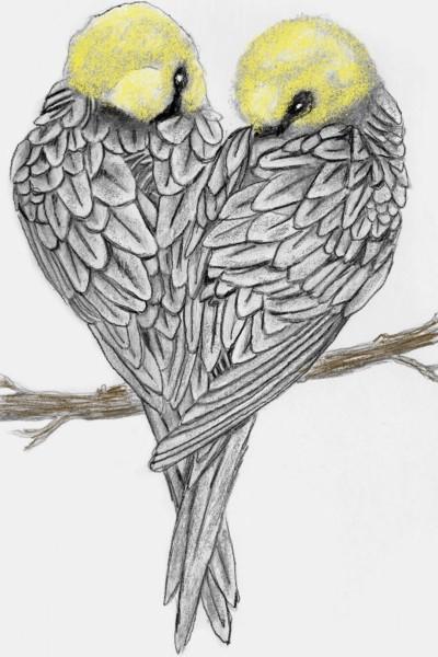 love birds  | dusty | Digital Drawing | PENUP