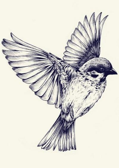 bird   Vanedraws   Digital Drawing   PENUP
