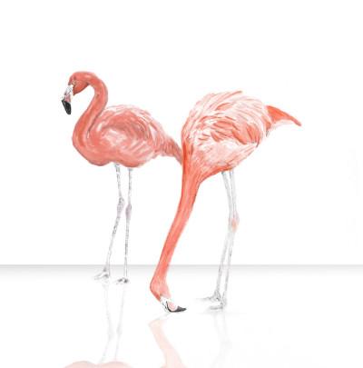 Flamingos | Plewi | Digital Drawing | PENUP