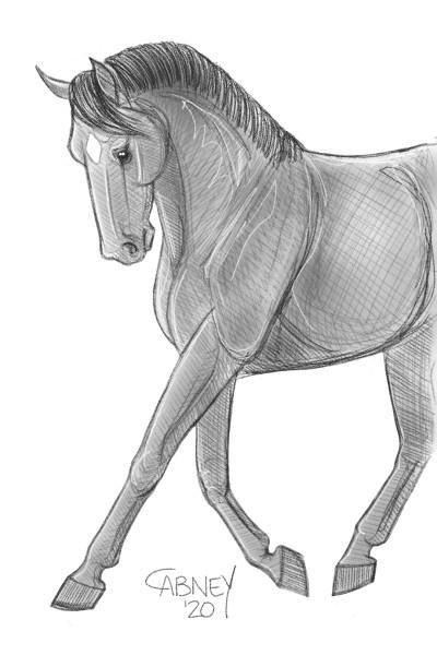 Animal Digital Drawing | shadowmare72 | PENUP