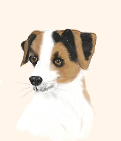 Jack Russell  | Lozly | Digital Drawing | PENUP
