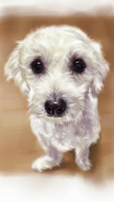 lovely puppy ~^^ | akira | Digital Drawing | PENUP