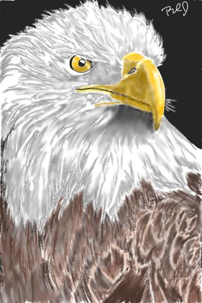 Bald Eagle   nyyankeehitman   Digital Drawing   PENUP