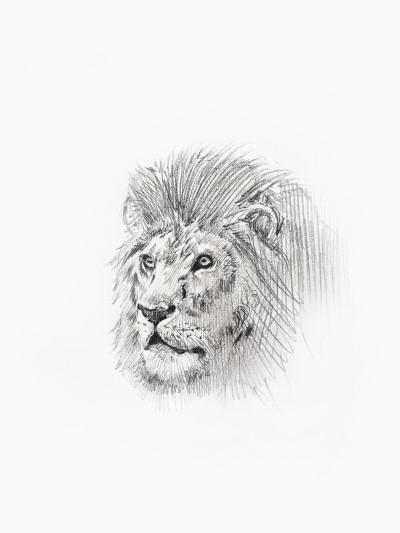LION    KWON   Digital Drawing   PENUP