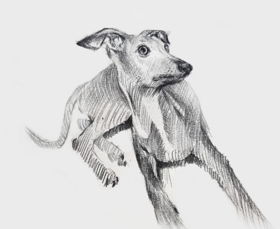 Italian grey hound   KWON   Digital Drawing   PENUP